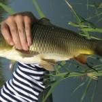Как сделать закидушку для рыбалки своими руками?